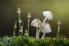 ghizzy_macrophotography_web_5